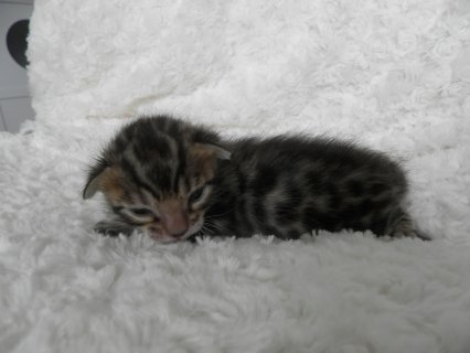 home trained kittens ready for re-homing
