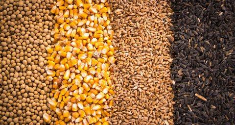 توريد محاصيل الحبوب من روسيا