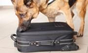 كلاب الكشف عن القنابل