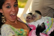 Capuchin Monkeys for your home
