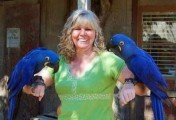 two Hyacinth Macaw Parrots for adoption