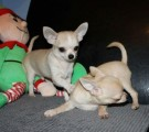 Handsome tiny boys for a new very loving ..